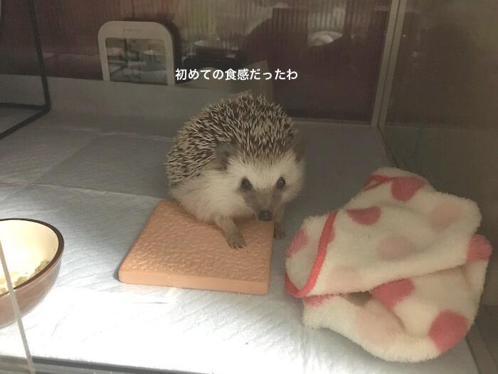 f:id:chikojirou:20170110213302j:plain