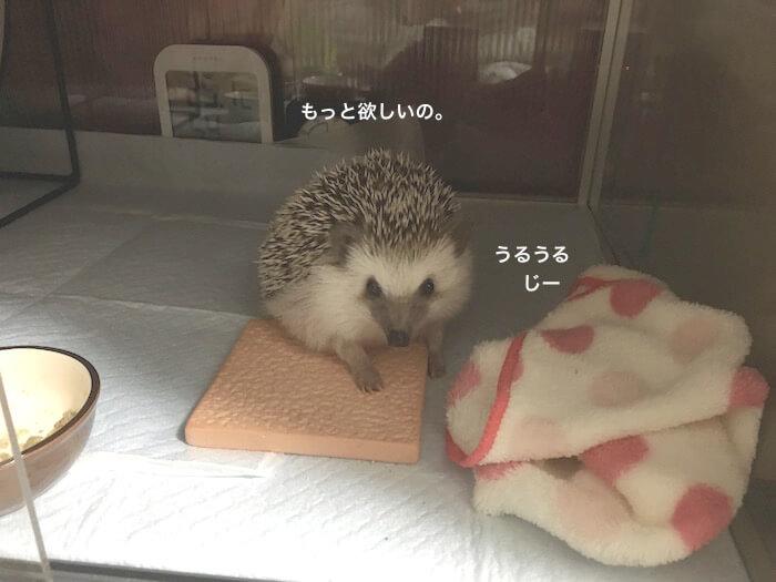 f:id:chikojirou:20170110213315j:plain
