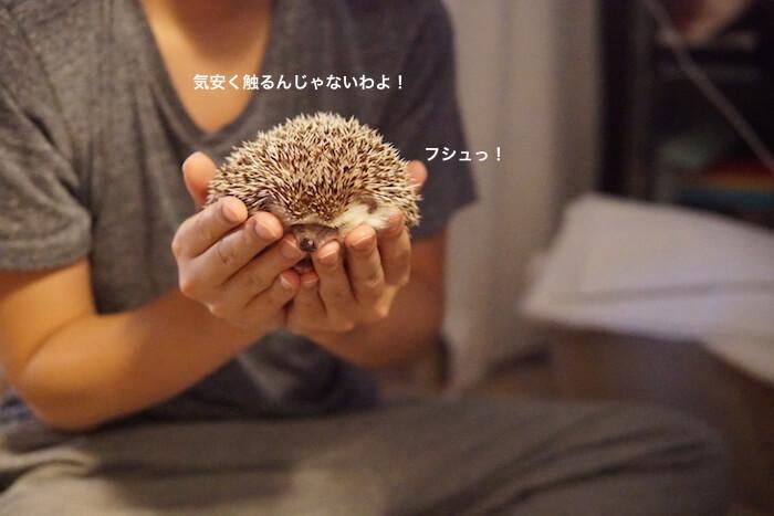 f:id:chikojirou:20170110213343j:plain