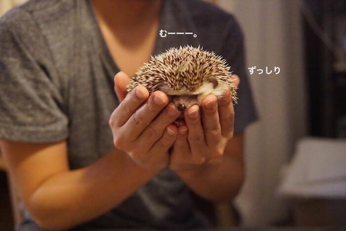 f:id:chikojirou:20170110213355j:plain