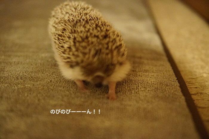 f:id:chikojirou:20170110213455j:plain