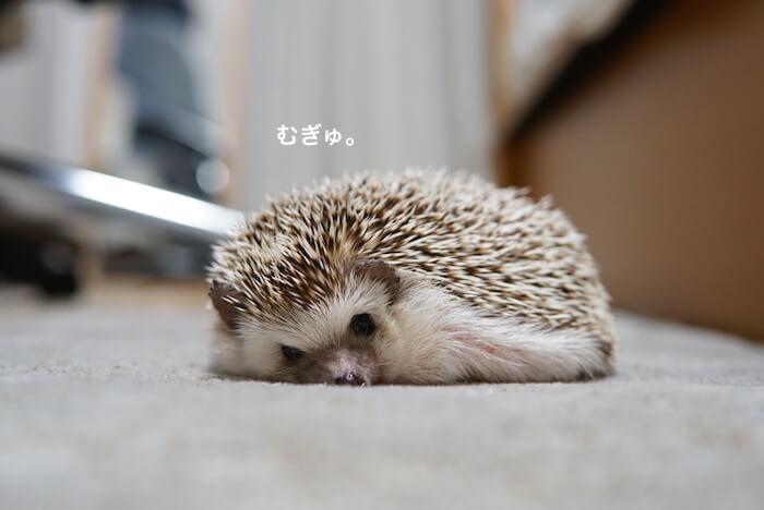 f:id:chikojirou:20170112212252j:plain