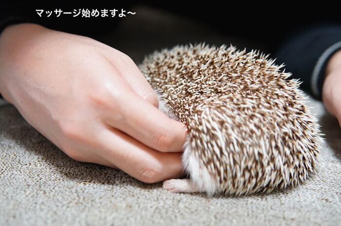 f:id:chikojirou:20170115114354j:plain