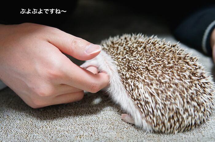 f:id:chikojirou:20170115114426j:plain