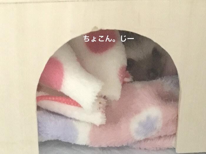 f:id:chikojirou:20170115114517j:plain