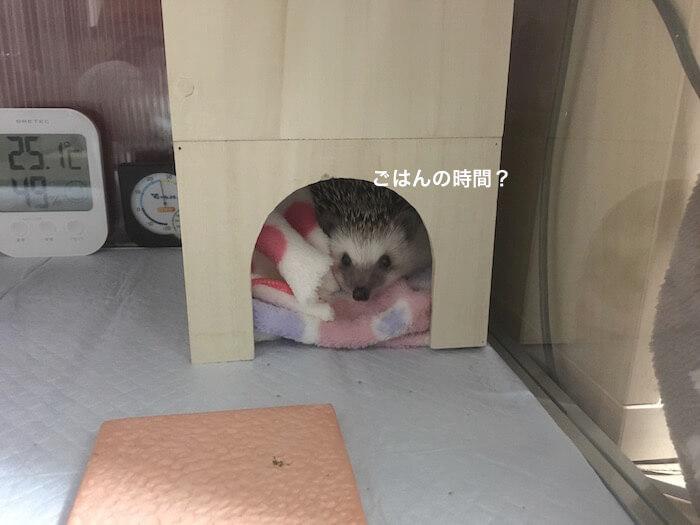 f:id:chikojirou:20170115114528j:plain