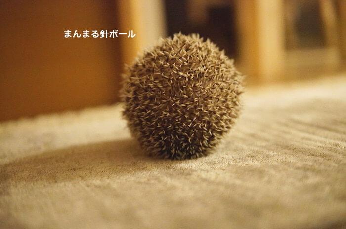 f:id:chikojirou:20170116212525j:plain