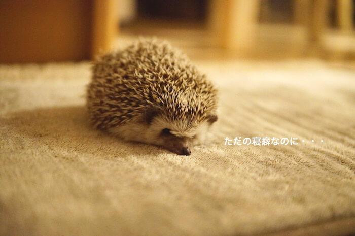 f:id:chikojirou:20170116212616j:plain