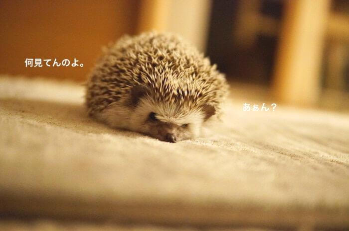 f:id:chikojirou:20170116212634j:plain