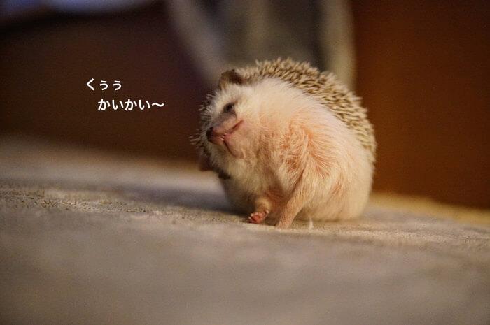 f:id:chikojirou:20170118215132j:plain