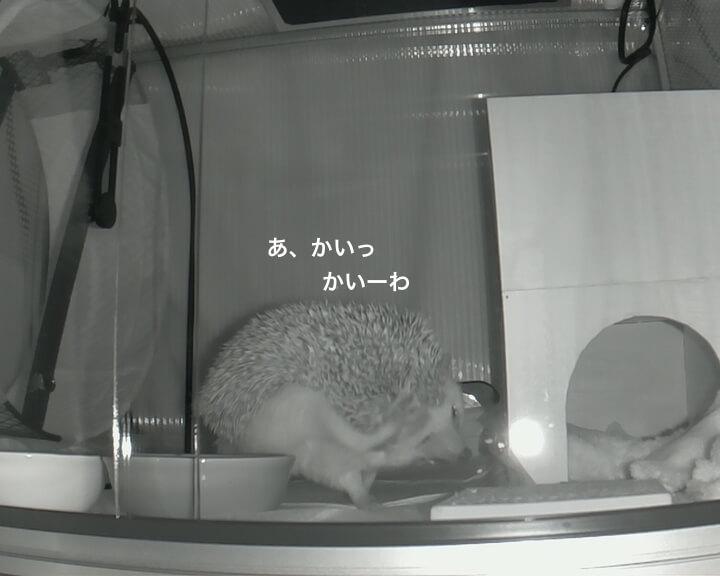 f:id:chikojirou:20170118215214j:plain