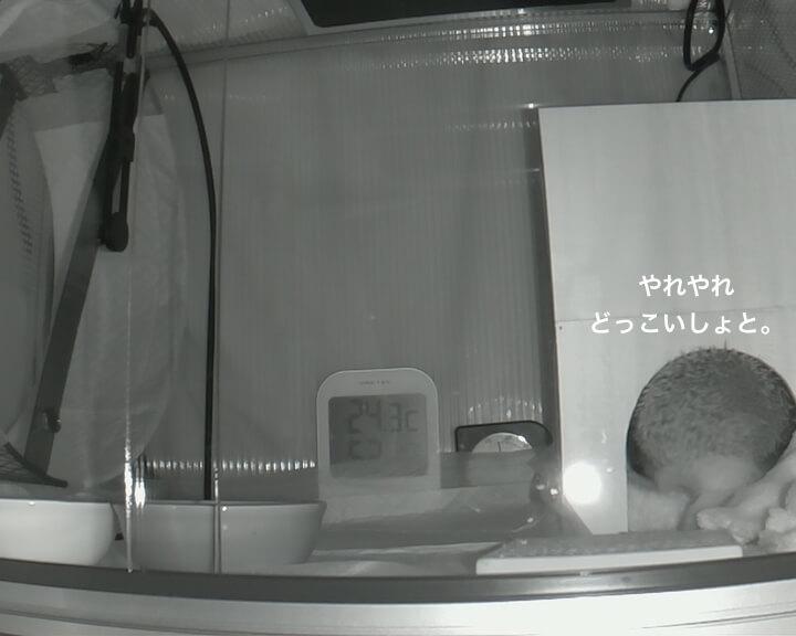 f:id:chikojirou:20170118215225j:plain