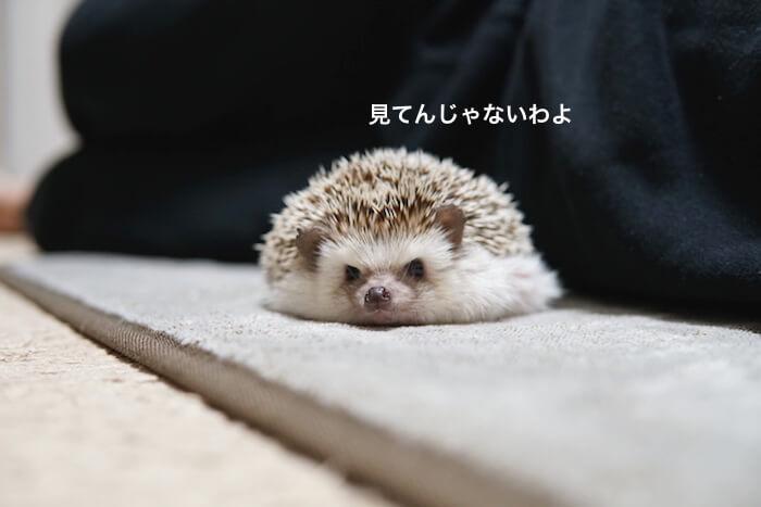f:id:chikojirou:20170122161036j:plain