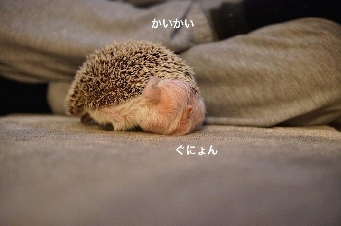 f:id:chikojirou:20170122161105j:plain