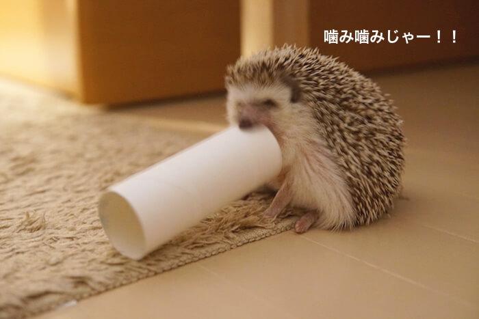 f:id:chikojirou:20170123210412j:plain