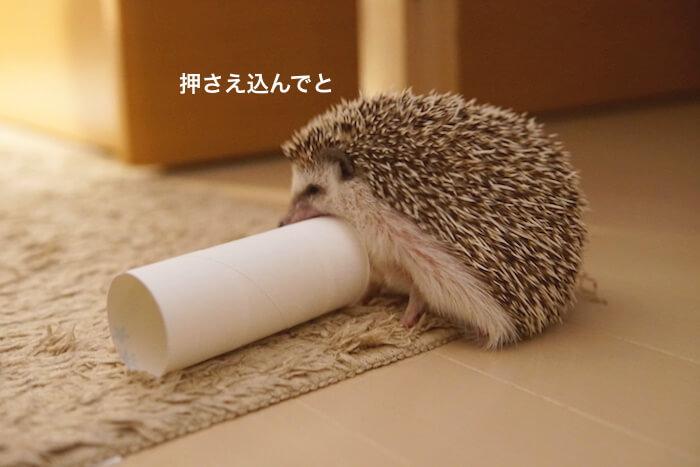 f:id:chikojirou:20170123210424j:plain