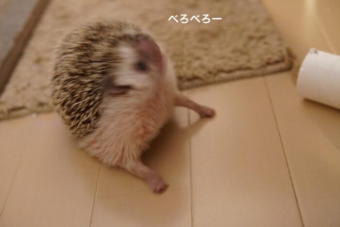 f:id:chikojirou:20170123210453j:plain