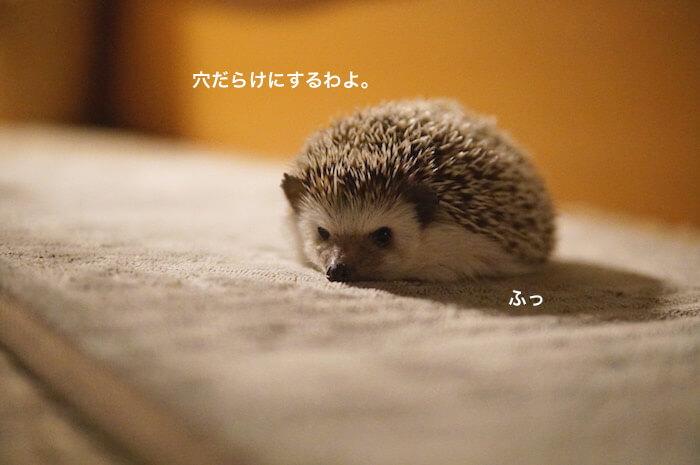 f:id:chikojirou:20170124214133j:plain
