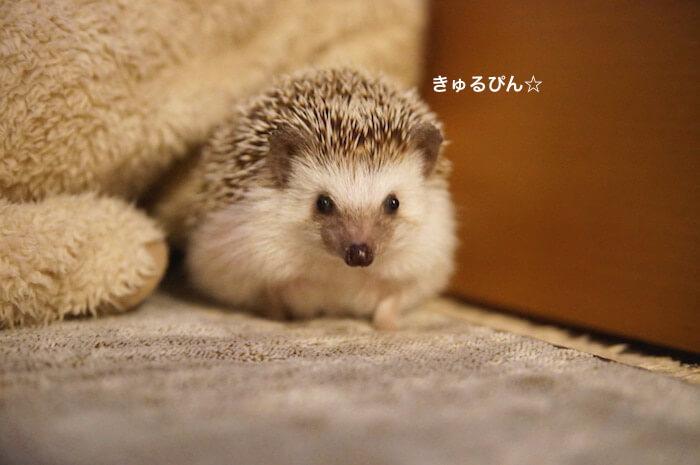 f:id:chikojirou:20170124214156j:plain