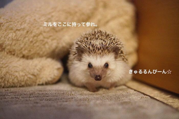 f:id:chikojirou:20170124214206j:plain