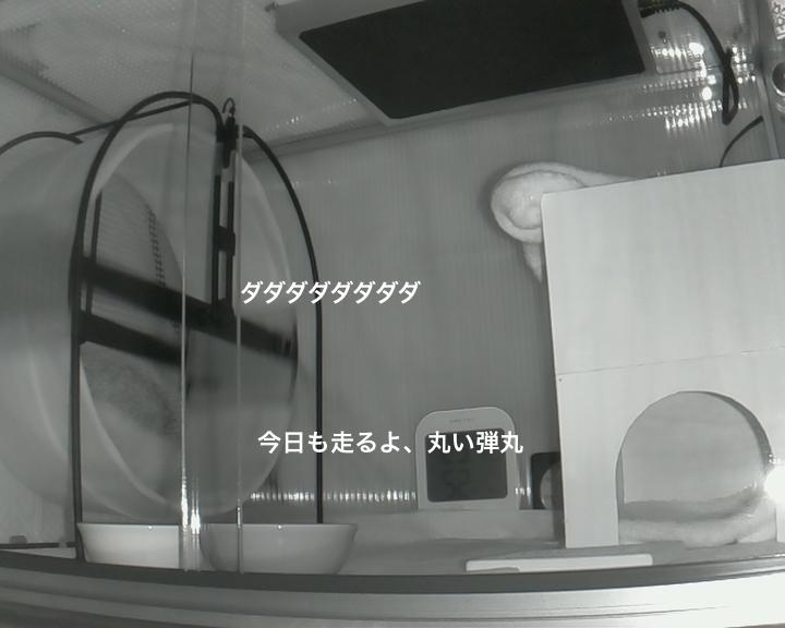 f:id:chikojirou:20170124214228j:plain
