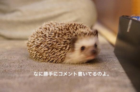 f:id:chikojirou:20170129203857j:plain