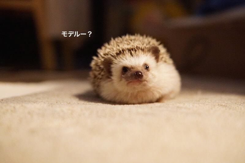 f:id:chikojirou:20170130210302j:plain