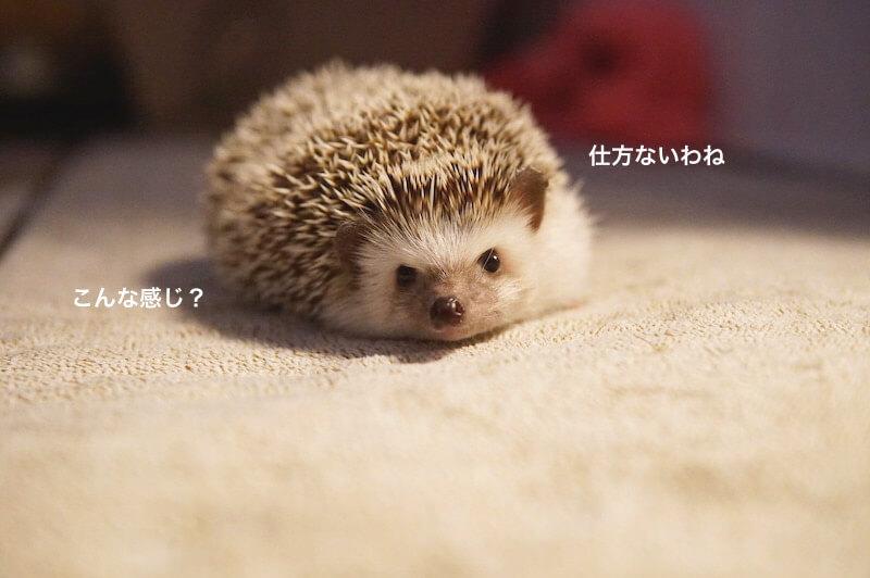 f:id:chikojirou:20170130210324j:plain