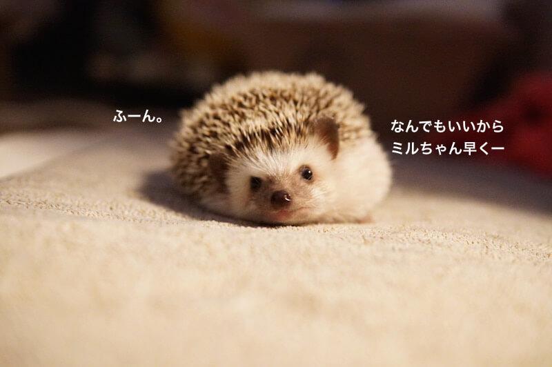 f:id:chikojirou:20170130210415j:plain