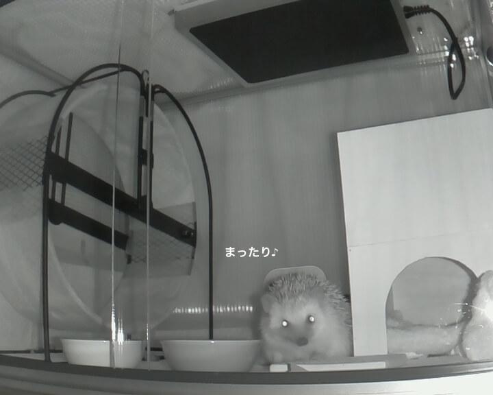 f:id:chikojirou:20170201212436j:plain