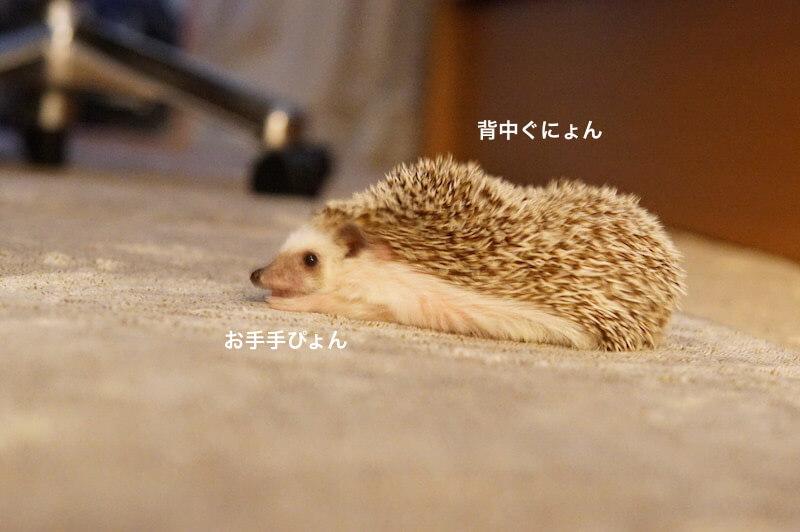 f:id:chikojirou:20170201212500j:plain