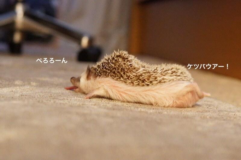 f:id:chikojirou:20170201212510j:plain