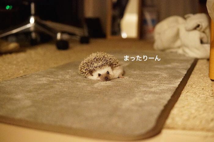 f:id:chikojirou:20170202214341j:plain
