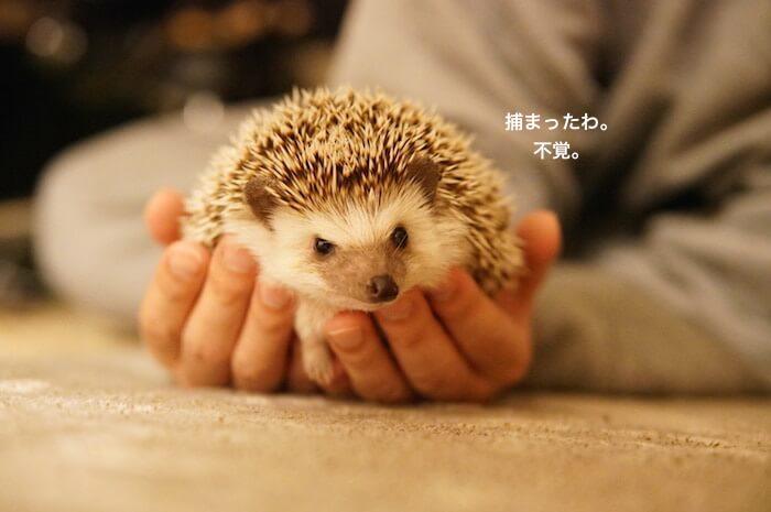 f:id:chikojirou:20170206212614j:plain