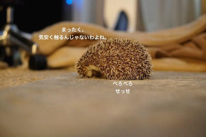 f:id:chikojirou:20170206212633j:plain