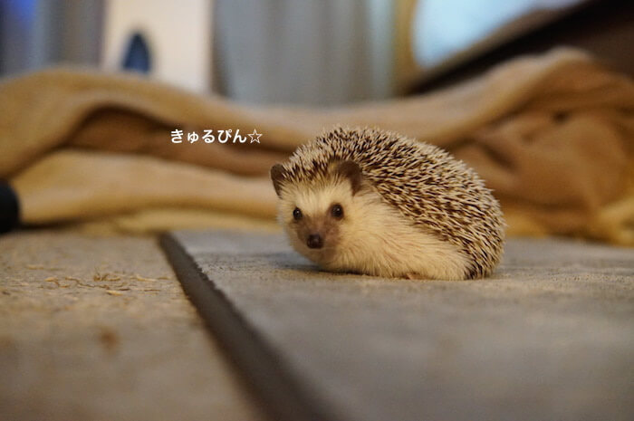 f:id:chikojirou:20170206212652j:plain