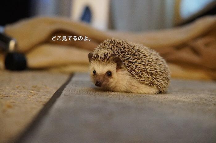 f:id:chikojirou:20170206212702j:plain