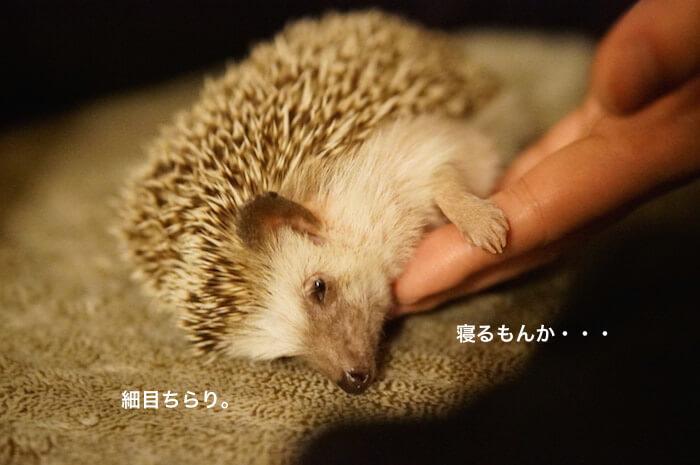 f:id:chikojirou:20170208215505j:plain