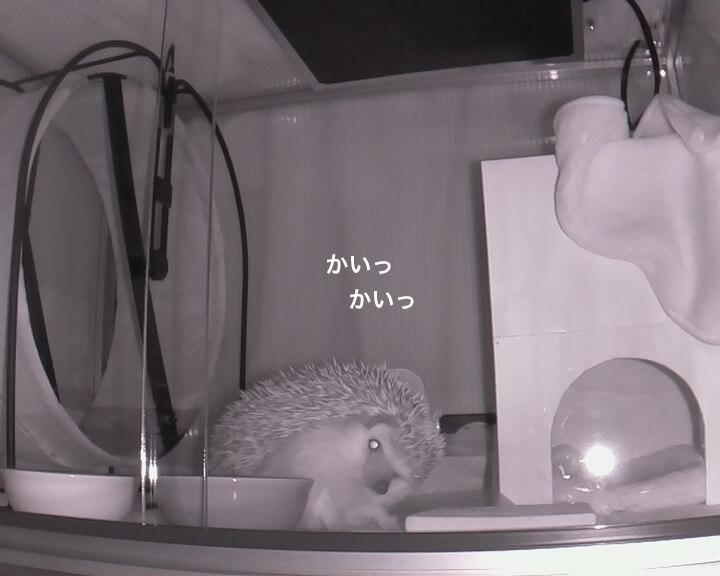 f:id:chikojirou:20170208215539j:plain