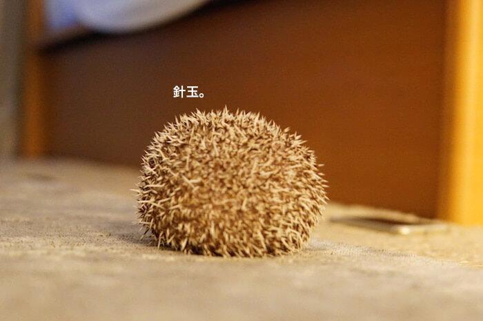 f:id:chikojirou:20170209214244j:plain