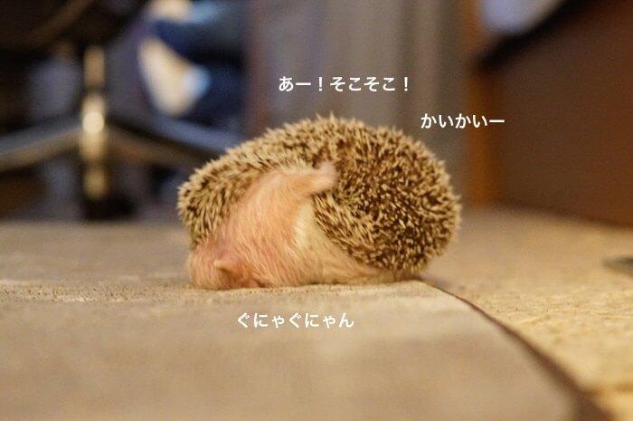 f:id:chikojirou:20170209214319j:plain