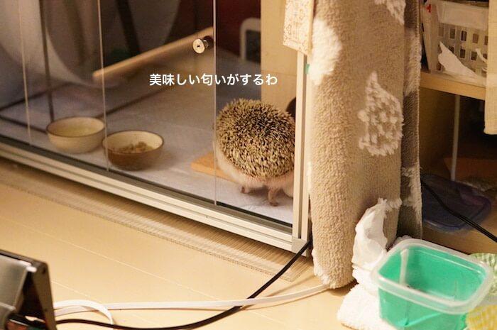 f:id:chikojirou:20170209214450j:plain