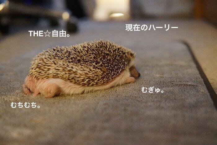 f:id:chikojirou:20170211155041j:plain