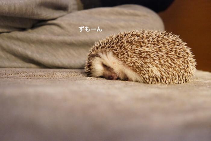 f:id:chikojirou:20170214215836j:plain