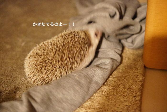 f:id:chikojirou:20170214215853j:plain