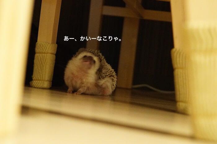 f:id:chikojirou:20170214220020j:plain