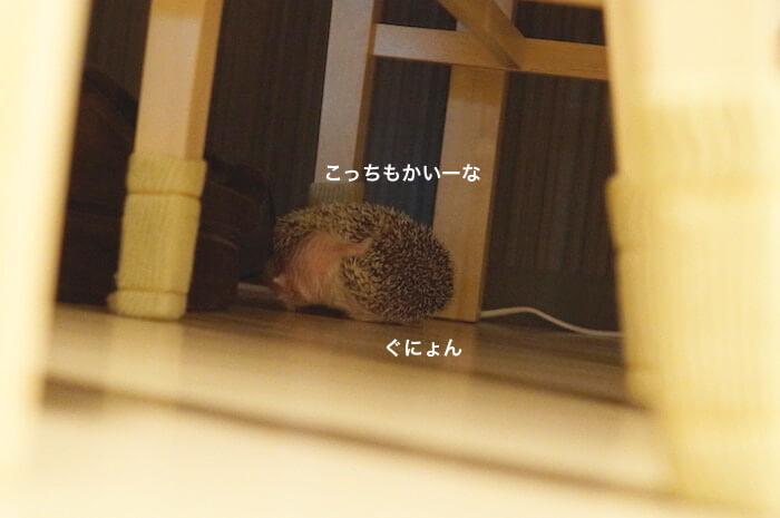 f:id:chikojirou:20170214220031j:plain