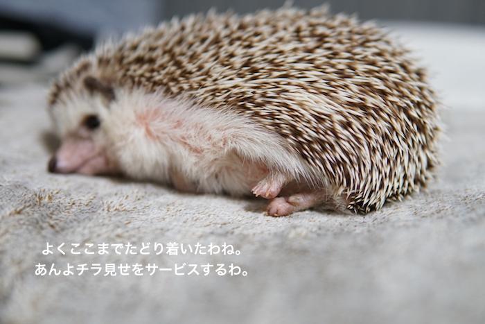 f:id:chikojirou:20170217221147j:plain