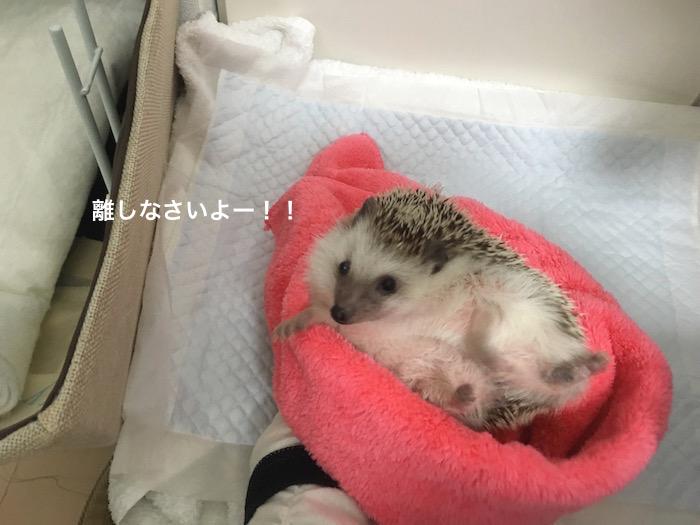 f:id:chikojirou:20170221214608j:plain