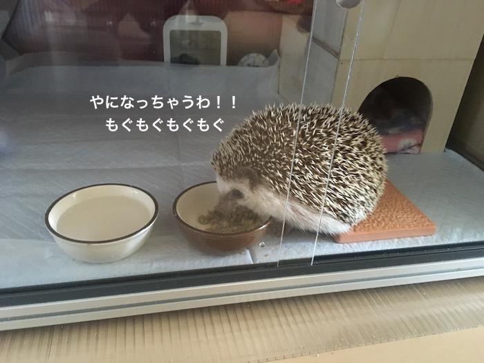 f:id:chikojirou:20170221214647j:plain